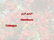 Githa-wa-dawa-13