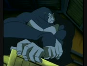 Kong-19